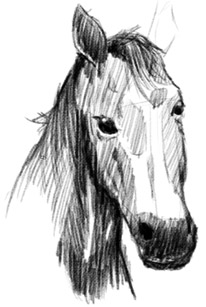 Drawing of a Horse Step 4