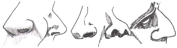 nose drawing 3