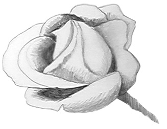 drawing a rose step 3